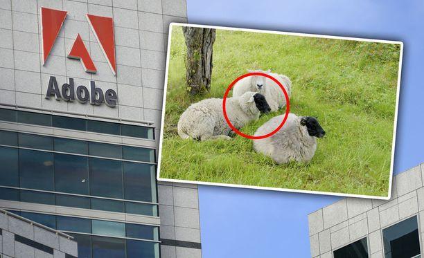 Adoben tekoäly osaa tunnistaa, jos kuvaa on muokattu. Kuvituskuva.