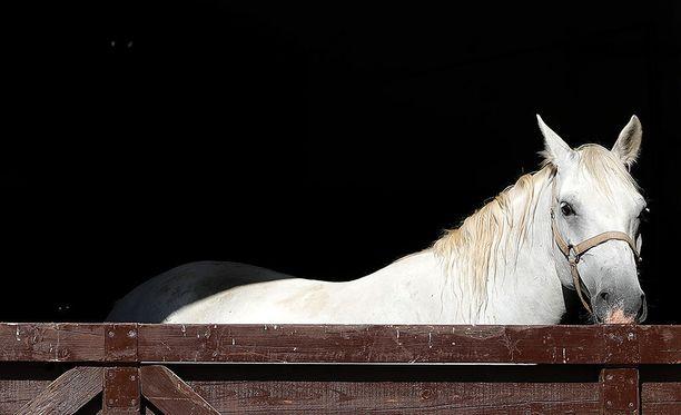 Helsinki International Horse Show'n käyttämä sähkö tuotetaan vuoden 2017 tapahtumassa 100-prosenttisesti hevosenlannalla