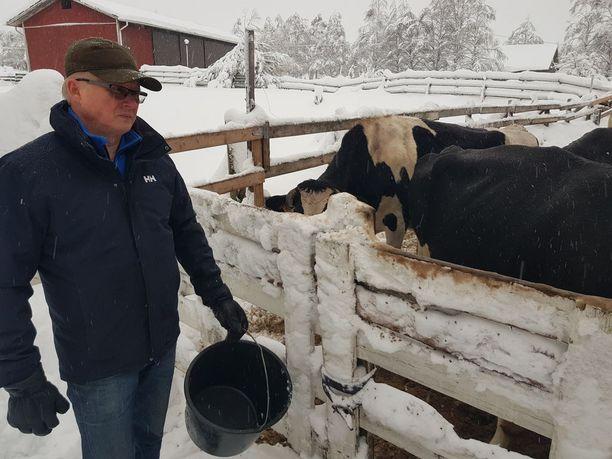 Esa Kemppainen ruokki karjaansa Hyrynsalmella perjantaina. Lypsäminen on jouduttu tekemään aggregaatin voimin jo viikon.