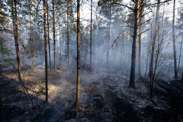 Pyhärannan kunnan alueella riehuu laaja metsäpalo. Useita asuntoja ja mökkejä on jouduttu evakuoimaan palon tieltä.