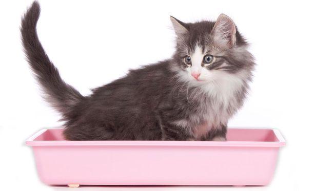 Kissaeläimien ulosteissa on ihmisen mielestä usein varsin ikävä haju.