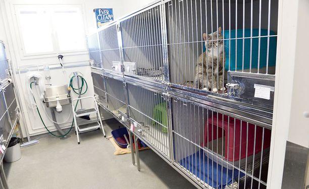 Kissat odottavat omistajaansa löytöeläintalolla 15 vuorokautta.
