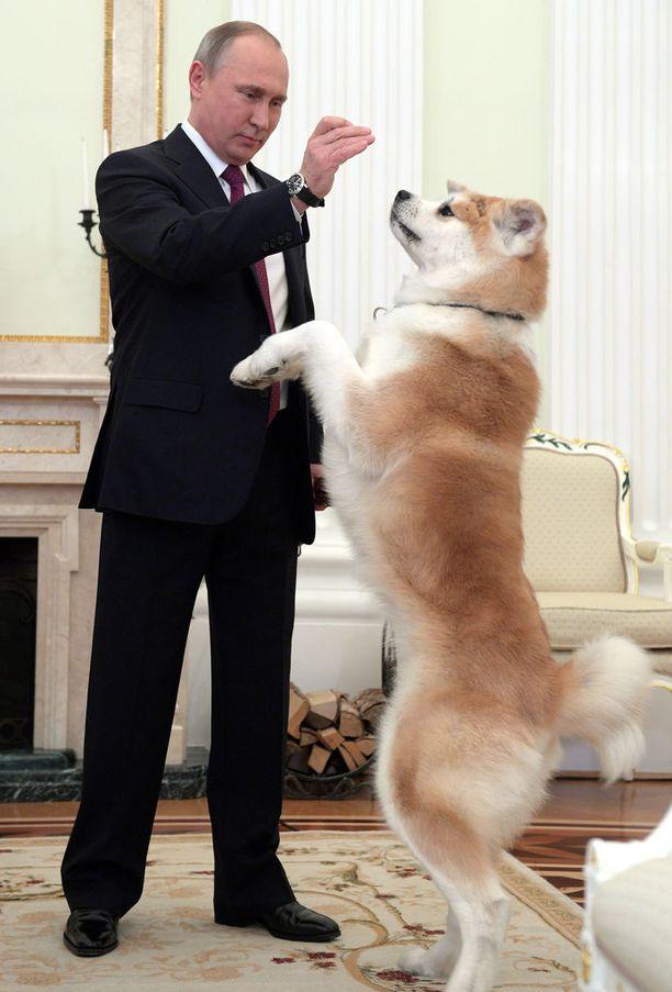 Putin antoi Japanilta lahjaksi saamalleen akitalle herkkuja japanilaisen median edessä viime joulukuussa.