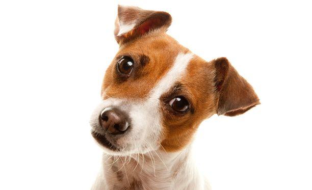 Koiraa puhutellaan joissain kodeissa lapseksi.