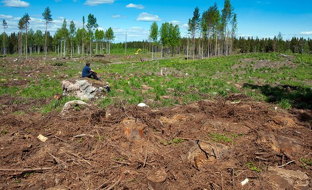 Avohakkuualue Hämeessä. Kuva vuodelta 2012.