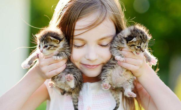 Kissaa pidetään jollakin tavalla oikullisempana ja omapäisempänä eläimenä kuin koiraa.