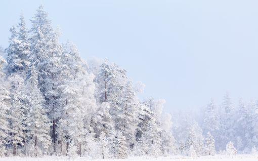 Rapsakka sääennuste! Talven hyytävin pakkasviikko tulossa tammikuussa