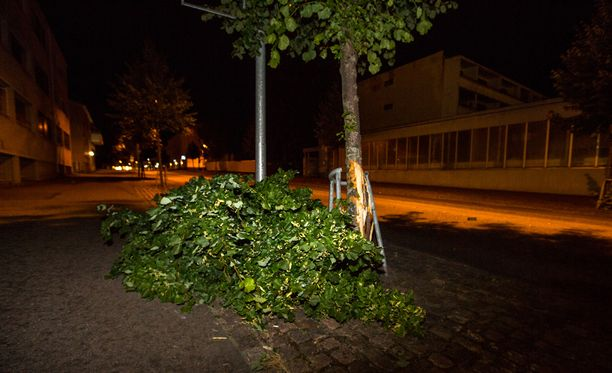 Auto törmäsi tien vieressä olleeseen puuhun.