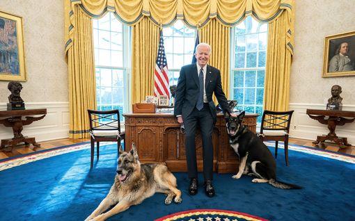 CNN: Toinen Bidenin koirista puri vartijaa – nelijalkaisille lähtöpassit Valkoisesta talosta
