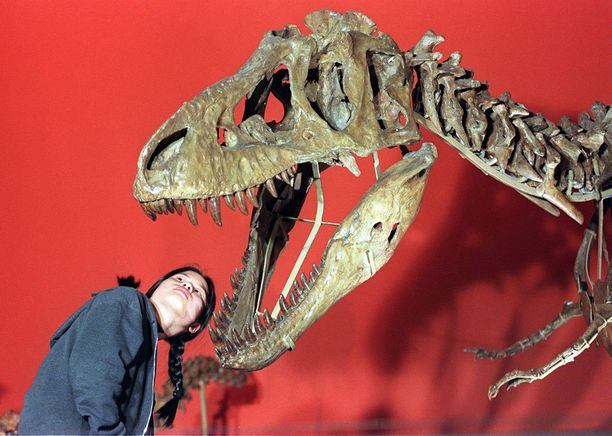 Lontoon luonnonhistoriallisessa museossa voi ihmetellä dinosauruksen luurankoja,