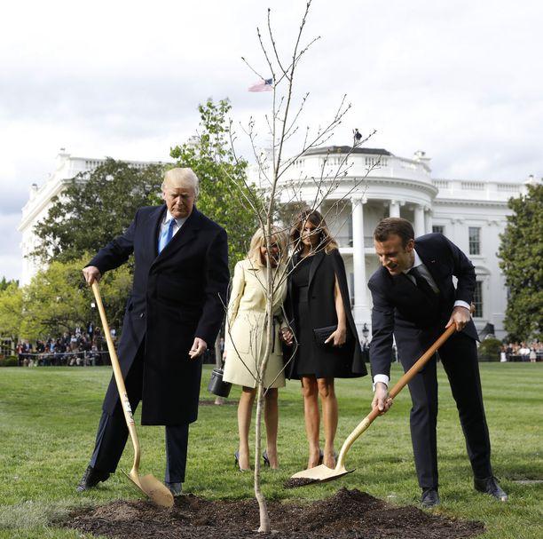 Tässä neljä päivää sitten otetussa kuvassa presidentit istuttuvat lahjapuuta.