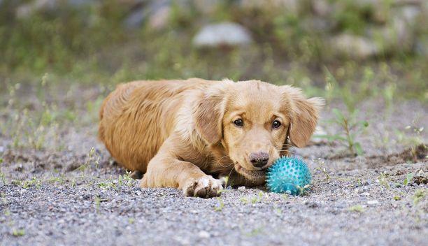 Kuvan koira ei liity tapaukseen, kuvituskuva.
