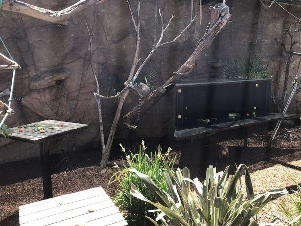 Rengashäntämaki tuntee olonsa kotoisaksi myös eläintarhassa.