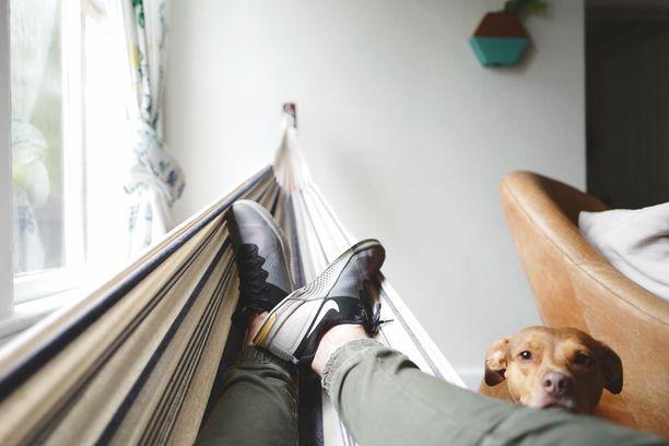 Kuonon tai pään painaminen ihmistä vasten on yksi koirien käyttämistä eleistä. Yleensä koira toivoo silloin rapsutuksia.