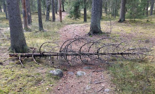 Puita ja oksia on laitettu keskelle metsäpolkuja.