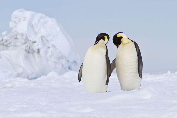 Maailman hyisimmät seudut löytyvät Etelänapamantereelta.
