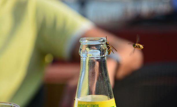 Viime kesänä ampiaisia sai hätistellä urakalla.