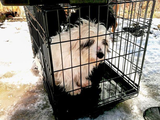 Dokumentissa vieraillaan myös Virossa, jossa pelastettiin aiemmin tänä vuonna pentutehtailijan käsiin joutuneita koiria. Ne olivat tulossa Suomeen myytäviksi.