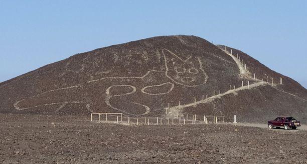 Uusin löydös on noin 37 metriä pitkä kissa kukkulan rinteellä.