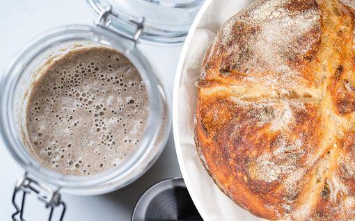 Leivoitko keväällä hapanleipäjuuren? Näin saat pidettyä lomaa leipäsammostasi