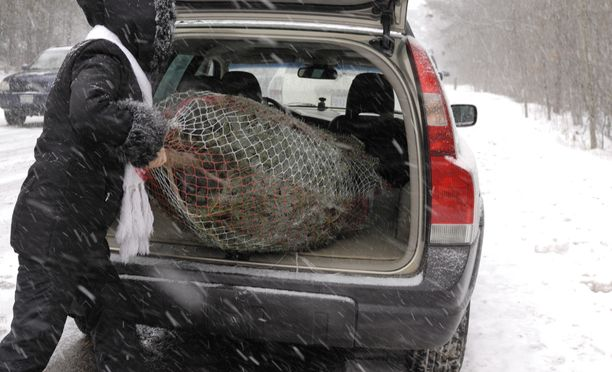 Varas sulloi joulukuusia autonsa takakonttiin Lahdessa. Kuvan tapahtumat eivät liity uutiseen.