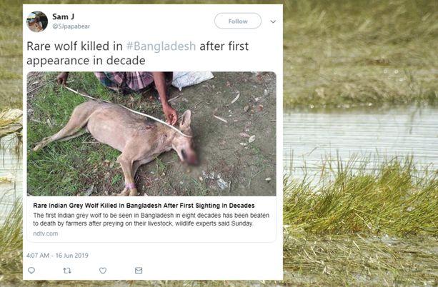 Bangladeshilaiset maanviljelijät tappoivat harvinaisen intiansuden.