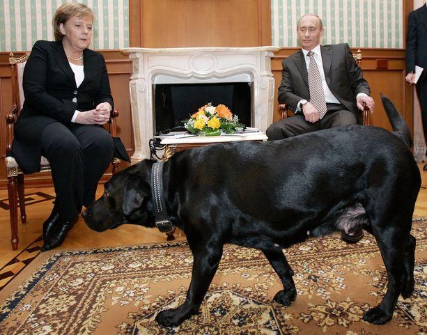 Putinin labradorinnoutaja Koni pelästytti Angela Merkelin vuonna 2007.