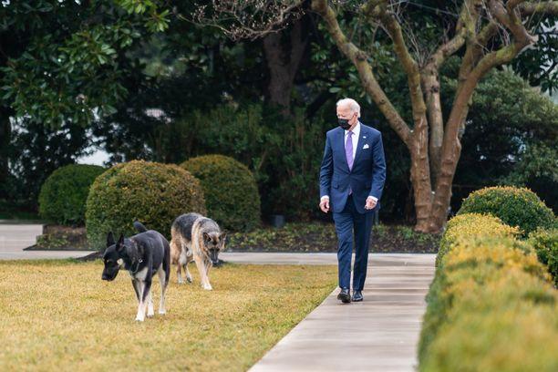 Major (kuvassa vasemmalla) sekä Champ palaavat isäntänsä Joe Bidenin luokse Valkoiseen taloon.