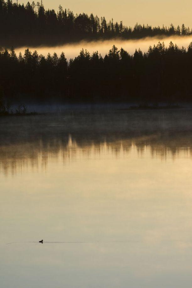 Luontoväki on Kuusamossa vastustanut kaivosta jo vuosia. Kuva on Juumasta. Linnuntietä Juomasuon kaivospiirille on 7 kilometriä.