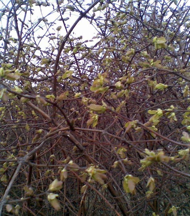 Luonto herää kevääseen.