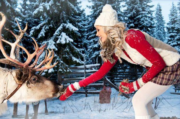 LEMPEÄÄ Jouluna myös eläimillä on joulurauha. Susannasta oli ihanaa päästä näkemään ja taputtamaan poroja.