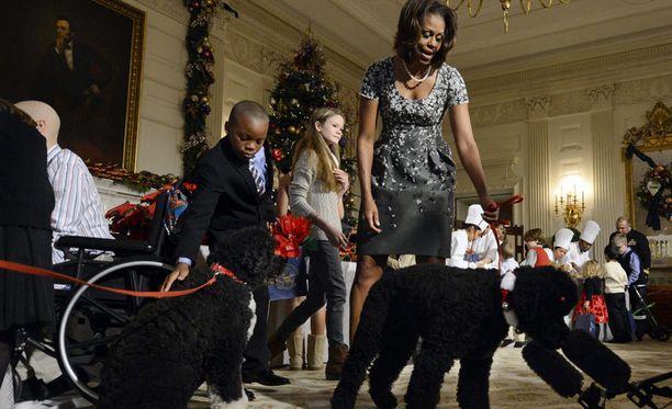 Aina ennen joulukoristeluissa salamavaloissa paistatellut perheen vanhempi koira Bob jäi tänä vuonna lähes huomiotta Sunnyn koheltaessa.