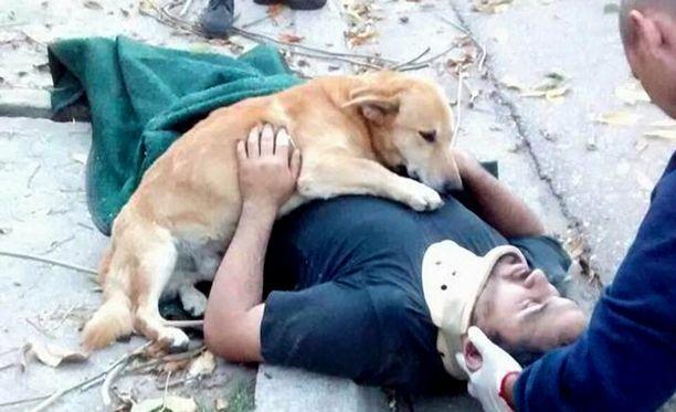 Koira suojeli loukkaantunutta isäntäänsä.