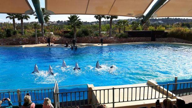 Attica Parkin näytöksissä ovat mukana kaikki eläintarhan kahdeksan delfiiniä.