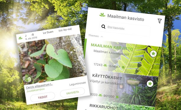 Sovellus tunnistaa kasvit kuvista.