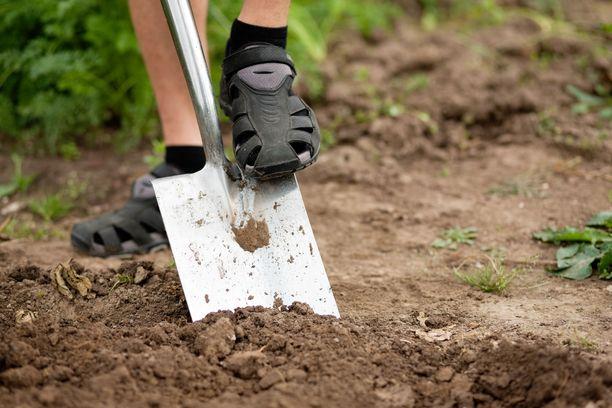 Joillekin kaivuutyöt ovat olleet ainut keino yrittää päästä eroon haitallisista vieraslajeista pihamaalta.