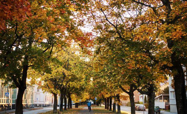 Pohjois-Suomessa on ensi viikola koleaa ja suurelta osin poutaista, mutta Etelä-Suomessa satelee.