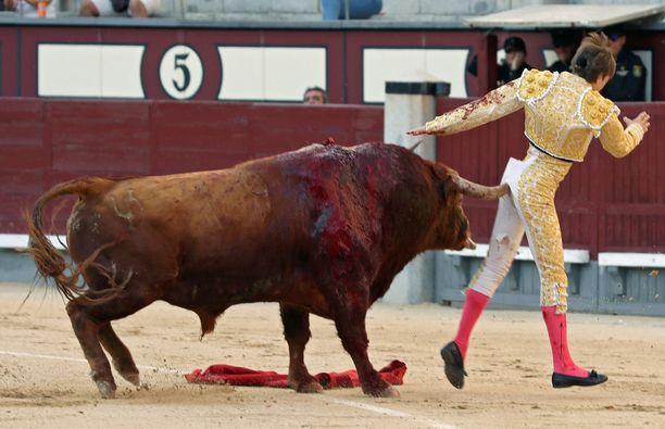 Matadori Juan Leal sai pahat vammat, mutta selvisi hengissä.