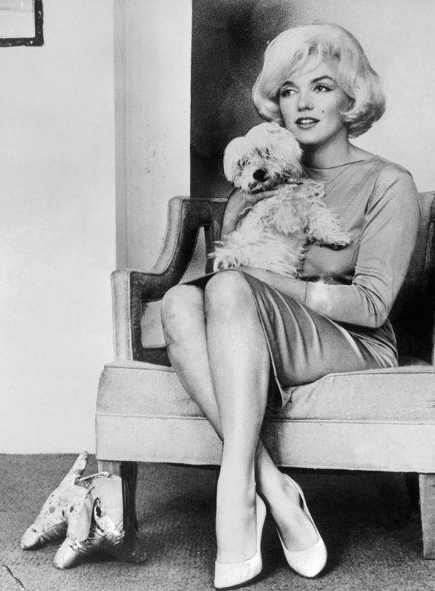 Marilyn Monroe ja maltankoira Maf, jonka näyttelijä sai laulaja Frank Sinatralta.