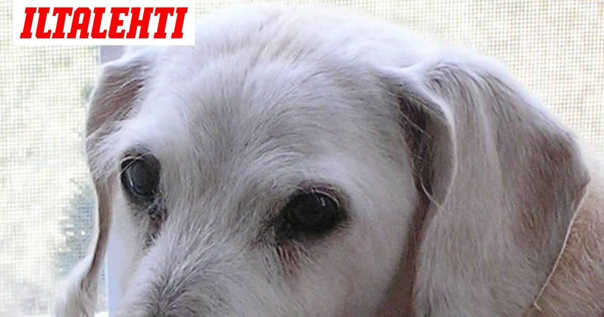 Maailman Vanhin Koira