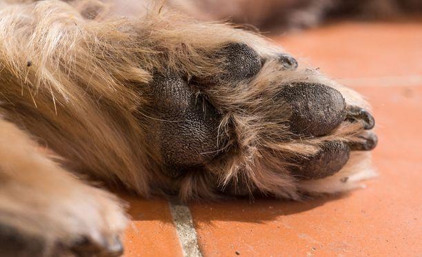 Kaleva kertoo Kiimingissä tammikuun lopussa paljastuneesta eläinsuojelurikoksesta. Kuvituskuva.