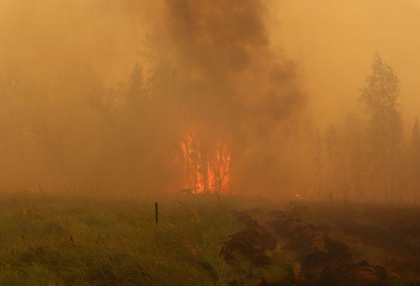 Kuuma kesä on vauhdittanut palojen leviämistä.