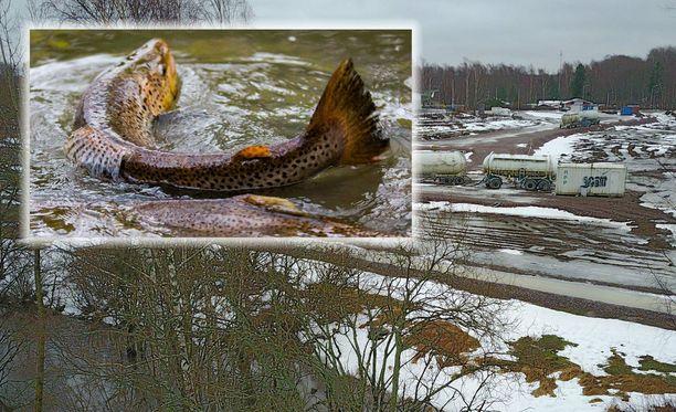 Sähkövika on aiheuttanut jätevesien ylivuodon Helsingin Longinojalla torstaiaamuna.
