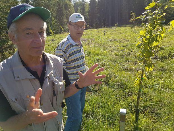 Pertti (vas.) ja Seppo Terävä hakkasivat nuoren kuusikon nurin ja perustivat liki 50 lajin puupuiston rajavyöhykkeelle.