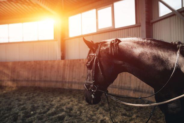 Poliisi joutui ampumaan loukkaantuneen ratsuhevosen. Kuvituskuva ei liity tapaukseen.
