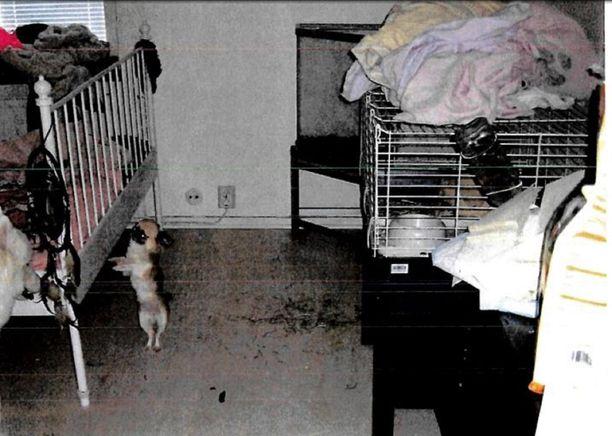 Pikkukoira asunnon makuuhuoneessa.