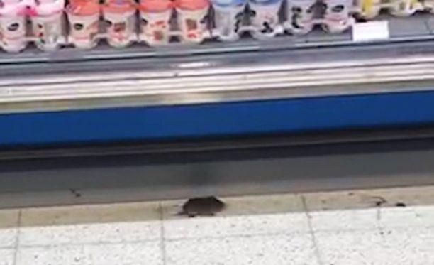 Hiiri yllätti myöhäiset ruokaostosten tekijät herttoniemeläisessä S-marketissa.