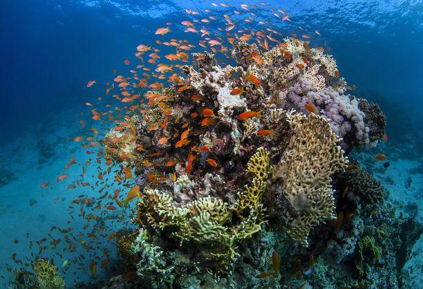Uusi-Kaledonia tunnetaan upeista koralliriutoista. Ilmastonmuutos on tuhonnut suuren osan Australian Isoa valliriuttaa, joka on maailman suurin koralliriutta.