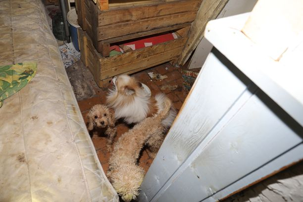 Poliisi julkaisi kuvan lopetettujen koirien ala-arvoisista oloista.
