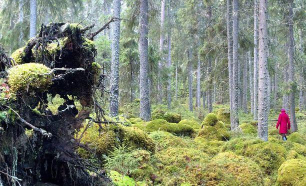 Metsiin sitoutuvan hiilidioksidin määrää on tarkoitus kasvattaa.
